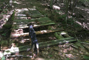 Asha considers crossing the rickety bridge