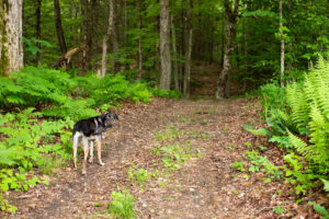 Asha stops on the trail